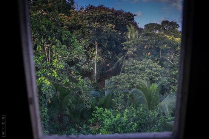 Gartenfotografie Garten Panama Fotograf